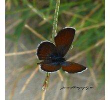 A Butterflies View Photographic Print
