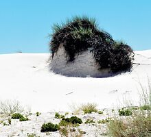 WHITE SANDS CHIA PET by Thomas Barker-Detwiler