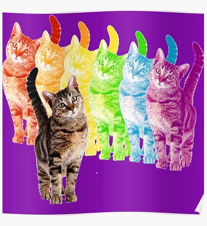 rainbow cats Poster