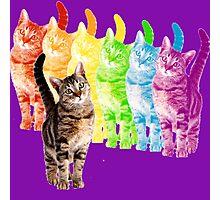 rainbow cats Photographic Print