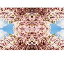 Blossom #3 Photographic Print