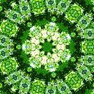 Emerald Lace by Shawna Rowe