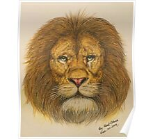 Regal Lion Drawing Poster