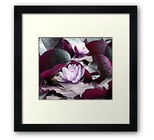Waterlily Escape Framed Print