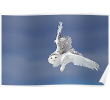 Flight of the Snowy Owl  Poster