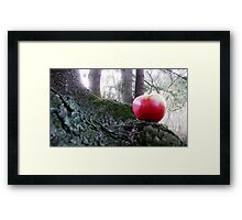 In the forest . Framed Print