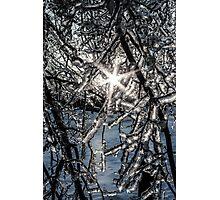 Ice Storm 2013 Photographic Print