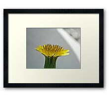 NS Yellow Dreaming ONFX© Framed Print