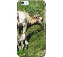 New Born Sheep iPhone Case/Skin