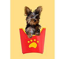 Dog Fries Photographic Print