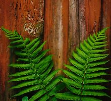 Plants and Wood by Denise Grier