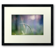 Ear with nature abstract background Framed Print