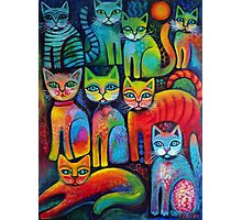 Colourful Kittens Photographic Print