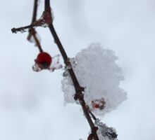 Crataegus Viridis - Winter King | Center Moriches, New York Sticker