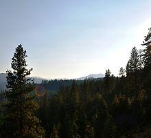 Hoodoo Canyon Area View by tsarts