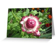 Everlasting flower and the ant Greeting Card
