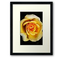 Rich Dreamy Yellow Rose Framed Print
