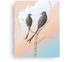 Black Drongos 3 Canvas Print