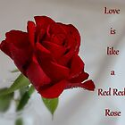 Love is Like a Red Red Rose by AnnDixon
