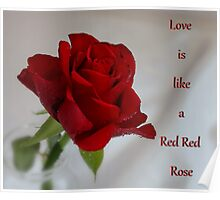 Love is Like a Red Red Rose Poster