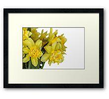 Daffodils macro in white Framed Print