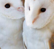 two owls friends Sticker