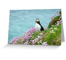 Puffin in sea pinks, Saltee Islands, County Wexford, Ireland Greeting Card