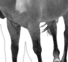 Horse in Pencil: Realism Drawing, Horse Nipping at Insects Sticker
