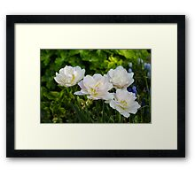 Soft White and Baby Pink Tulip Quartet - Enjoying the Beauty of Spring Framed Print