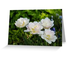 Soft White and Baby Pink Tulip Quartet - Enjoying the Beauty of Spring Greeting Card