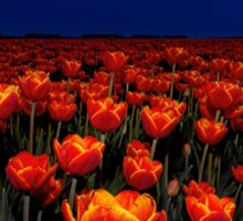 Field of Red Tulips Sticker