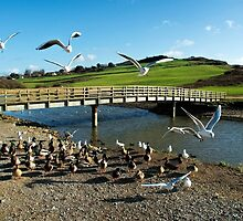 Wildlife At The River Char 2 by Susie Peek
