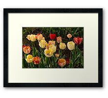 Multicolor Tulip Garden - Enjoying the Beauty of Spring Framed Print