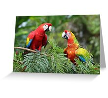 Scarlet Macaws - Costa Rica Greeting Card