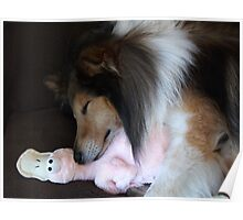 Shetland Sheepdog sleeping with his toy Poster