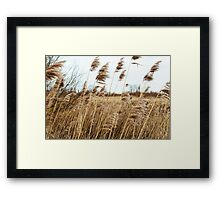 Colors of the Wind Framed Print