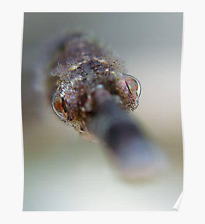 Pipefish Portrait Poster