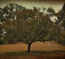 tree, surreal by A.R. Williams