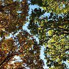 Autumn by Victoria Kidgell