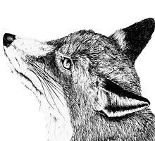 Fox by amyoharris
