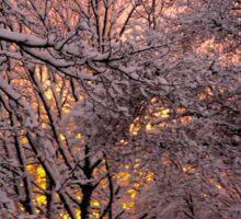 Pink Winter Sunset Sticker