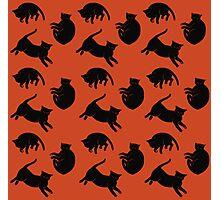 black kitties Photographic Print