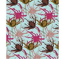 Thistle pattern Photographic Print