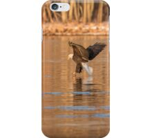 The Great American Bald Eagle 2016-11 iPhone Case/Skin
