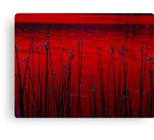 Reeds ! Canvas Print