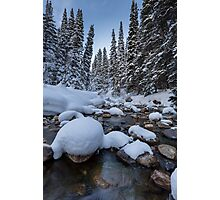 Snowy river with pine trees Photographic Print