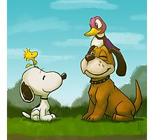 0034 - Bird Dogs Photographic Print