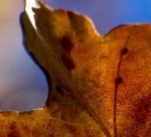 Autumn Oak Leaves 4 Sticker