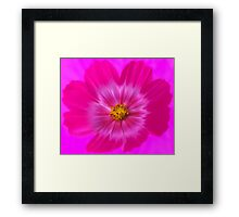 World of Hot Pink - Cosmos Framed Print
