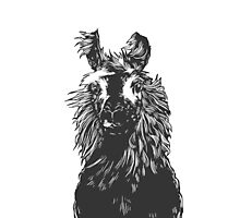 paper llama :: black white wool fiber alpaca tina napoleon funny cute farm farmer animal ink drawing Photographic Print